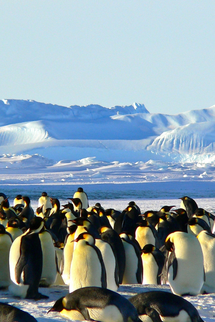 Antarctica | Best things to see in South America