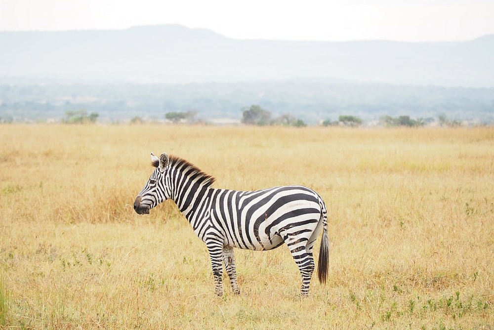 Everything you Need to Know Before you Visit Tanzania
