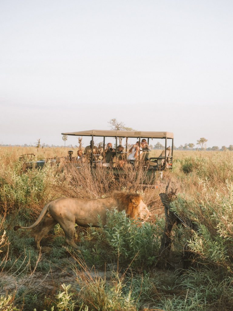 Sandibe Okavango Safari Lodge | WORLD OF WANDERLUST