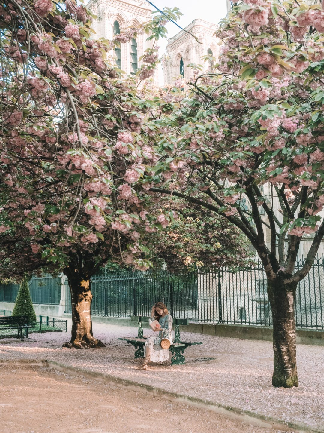 Where to find the best cherry blossoms in Paris | WORLD OF WANDERLUST