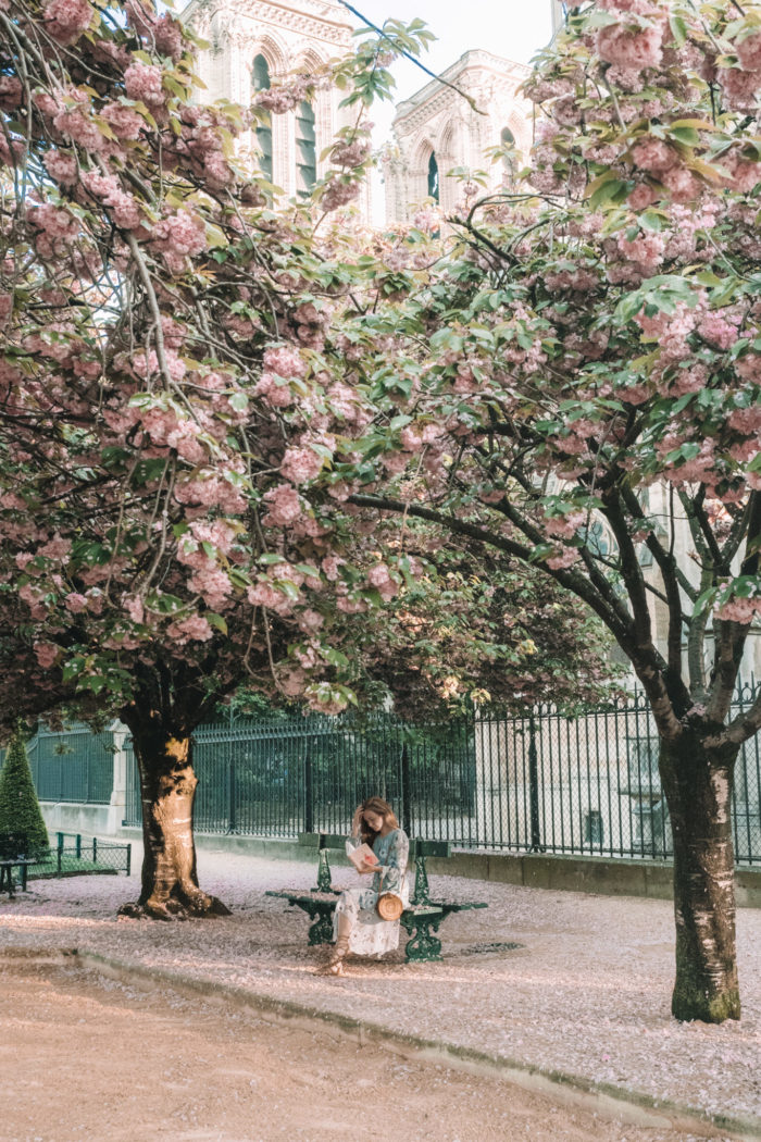 Where to Find the Best Cherry Blossoms in Paris