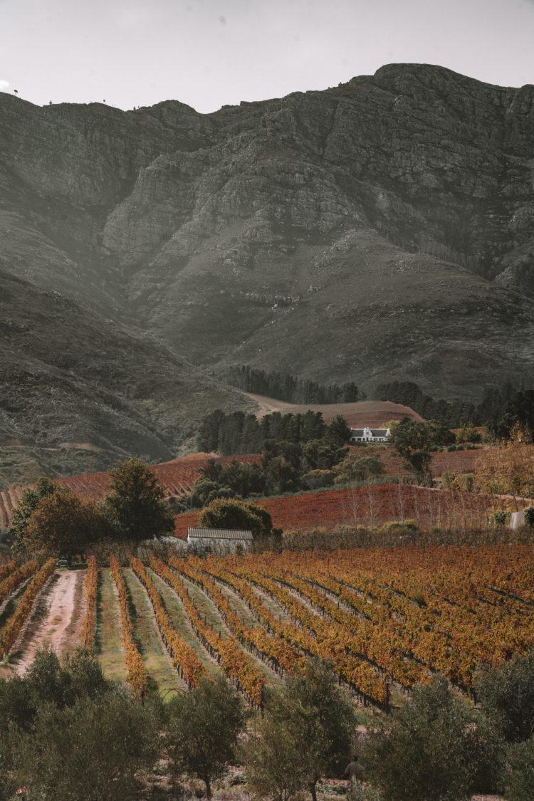 Cape Winelands South Africa | WORLD OF WANDERLUST