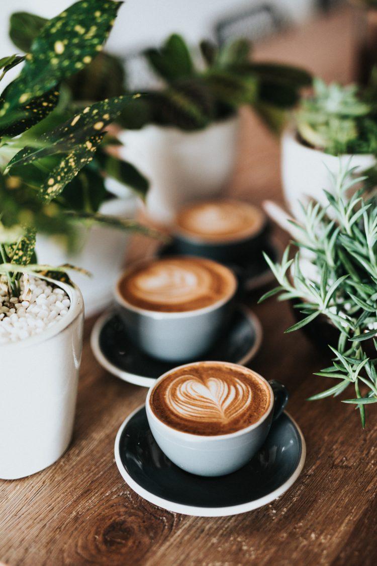 Best Coffee Shops in Ljubljana   WOW