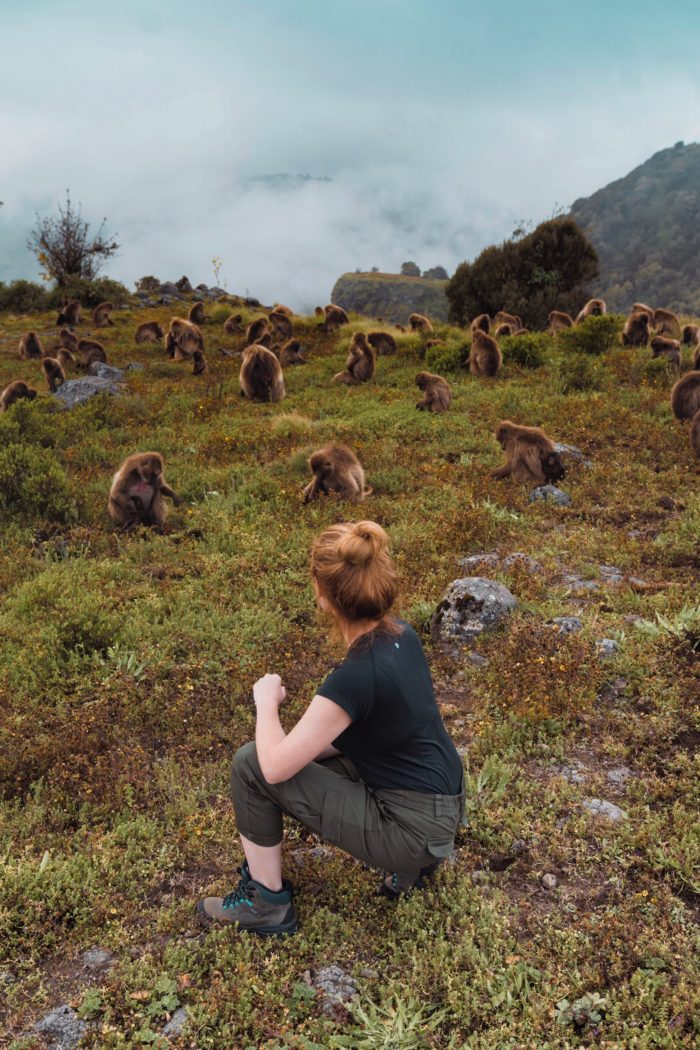 How to Visit the Gelada Monkeys in Ethiopia